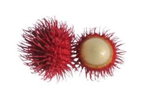 rambutan fruit open