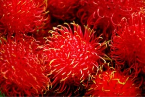 exotic rambutan fruit