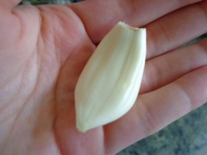 garlic in my hand