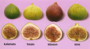 figs classification