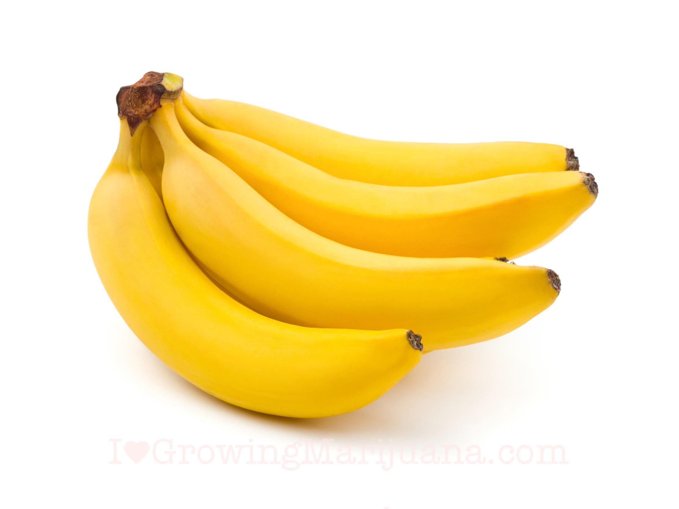 03-marijuana-banana