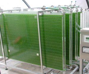 Photobioreactor PBR 500 P