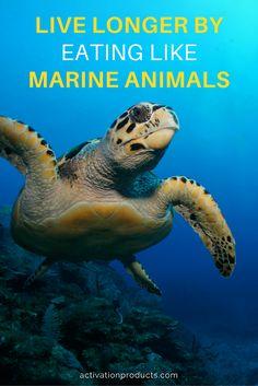 marine-phytoplankton